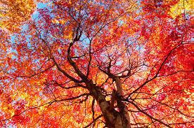 Herbstzauber in Bad Kreuzen mit Detoxangebot – Oktober 2019
